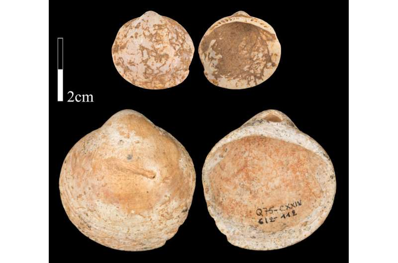 Naturally perforated shells one of the earliest adornments in the Middle Paleolithic