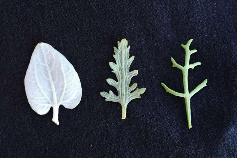 Natural selection helps maintain plant diversity, research finds