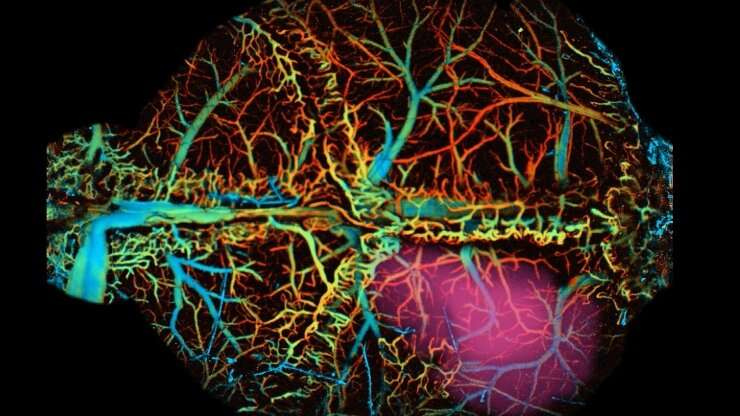 Neural sensors that use near-infrared light can reveal brain activity deep within animal models