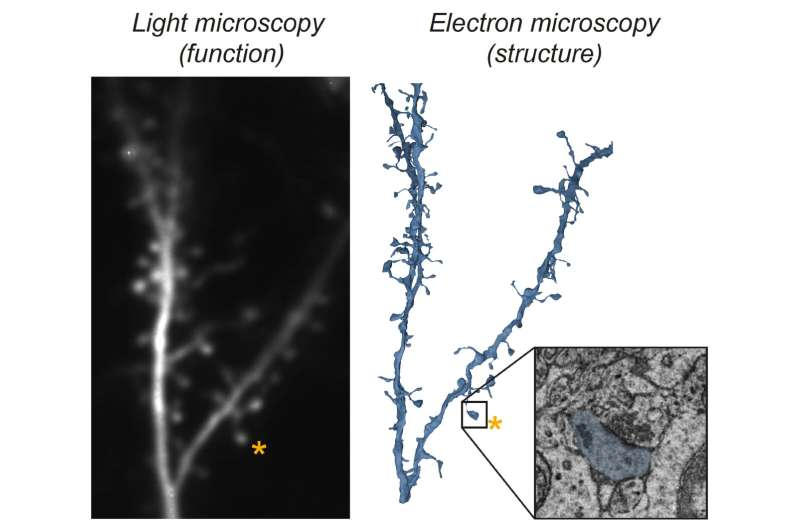 New approach reveals structure and function of individual synapses