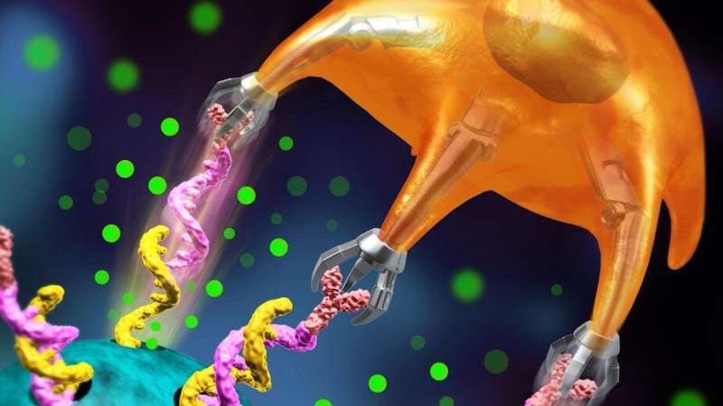 New cancer-fighting method leverages the mechanical force of T cells