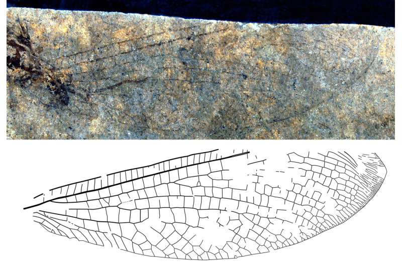 New fossil discovery shows 50 million-year-old Canada-Australia connection