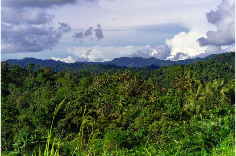New Guinea has the world's richest island flora