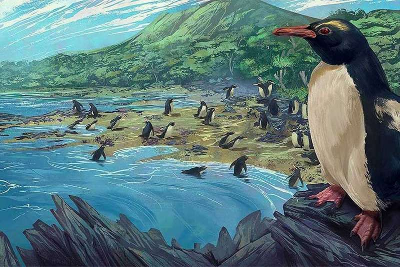Newly-described fossils reveal an ancient origin for New Zealand penguins