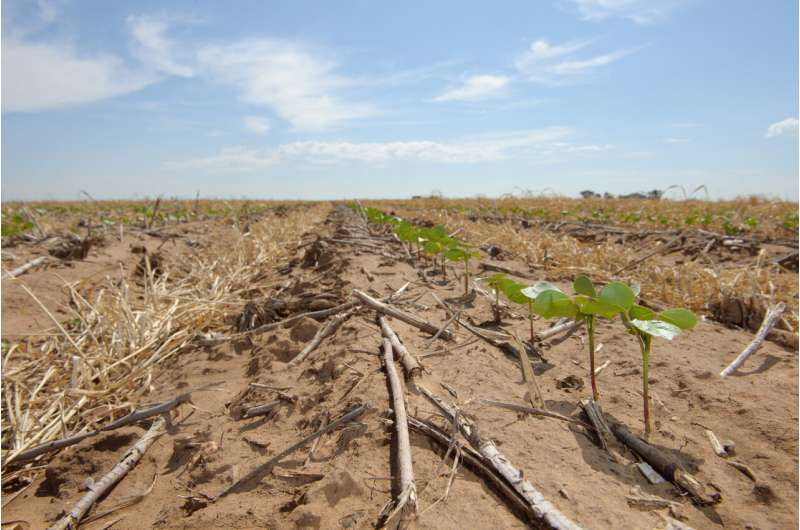New model shows how crop rotation helps combat plant pests