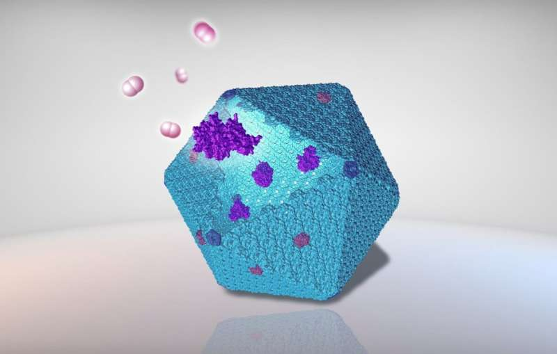 New protein nanobioreactor designed to improve sustainable bioenergy production