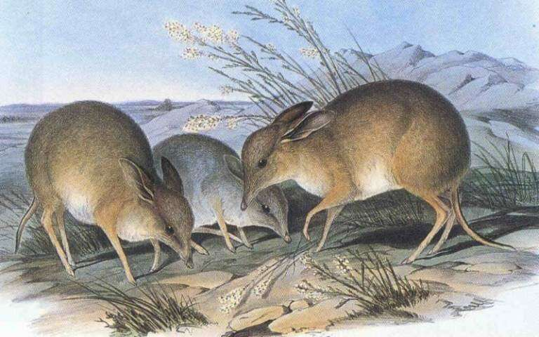 New species extinction target proposed for global nature rescue plan
