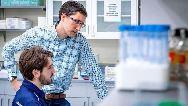 New study identifies potential path forward for brachial plexus injury recovery