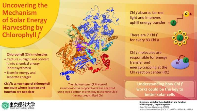 New study on a recently discovered chlorophyll molecule could be key to better solar cells