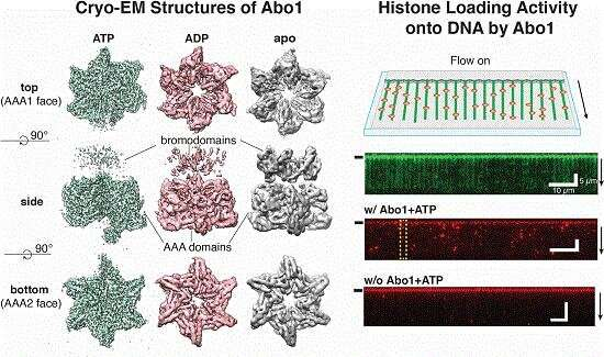 New study unveils the mechanism of DNA high-order structure formation