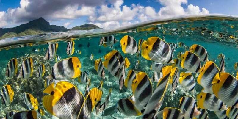 New world map of fish genetic diversity