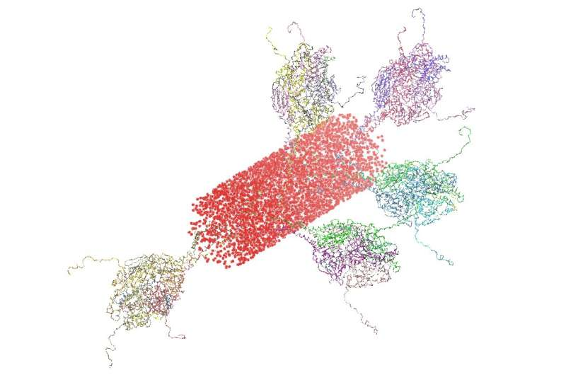 NIST clarifies structure of prospective vaccine for respiratory virus