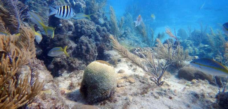NOAA strategy addresses stony coral tissue loss disease