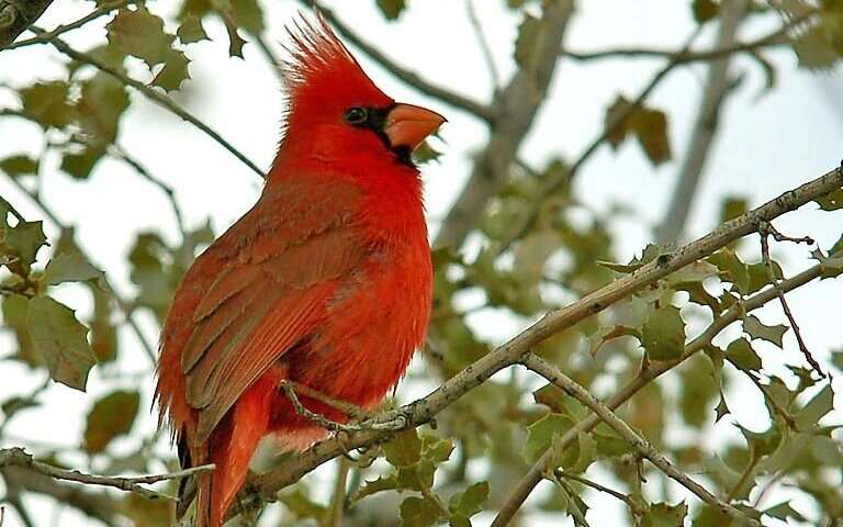 Noise and light alter bird nesting habits and success
