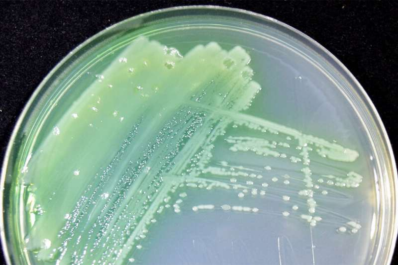 Not as gross as it sounds: Predicting how bacteria in mucus affect human health