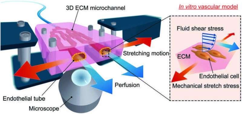 Novel and simple method to engineer a platform mimicking blood vessels