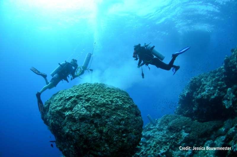Nutrients make coral bleaching worse