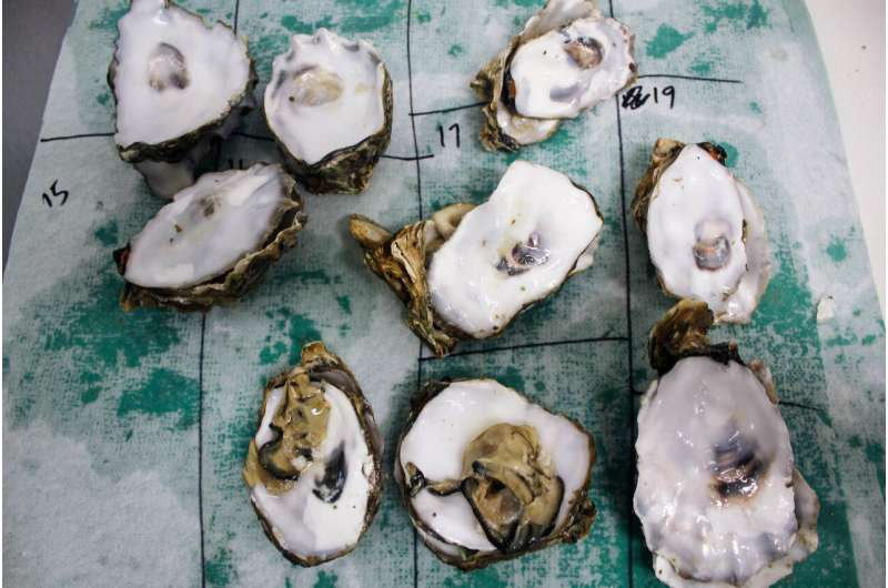 Ocean acidification impacts oysters' memory of environmental stress