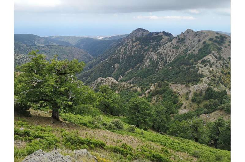 Oldest radiocarbon dated temperate hardwood tree in the world discovered at the Aspromonte National Park, southern Italy