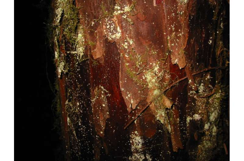 Pacific Yew bark
