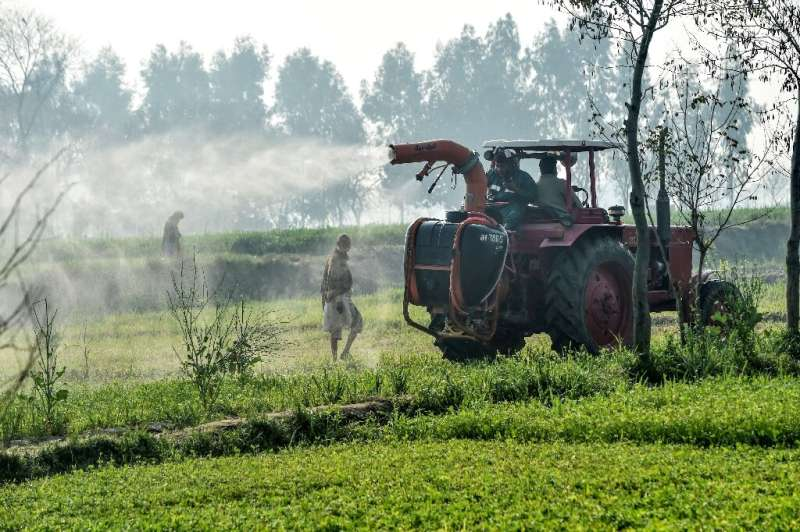 Pakistan could suffer about $5 billion in losses if 25 percent of its crops are damaged, the UN's Food and Agriculture Organizat
