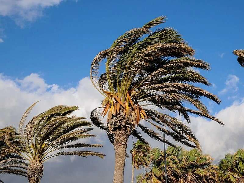Pandemic could complicate hurricane season
