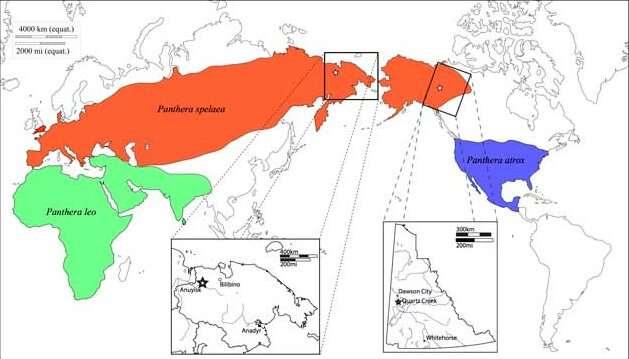 Pantera leo's family tree takes shape