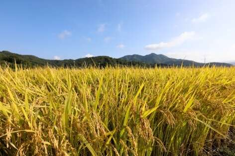 Patterns in crop data reveal new insight about plants and their environments