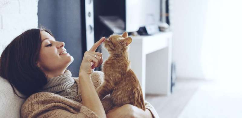 Pets, livestock and wildlife can all catch coronavirus – does that make them dangerous?