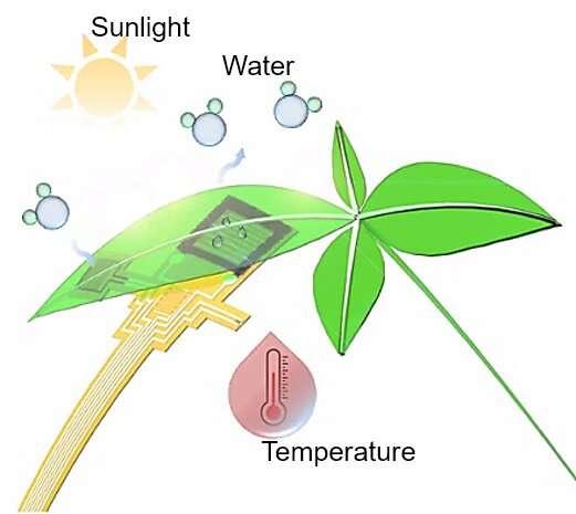Plant health management by flexible electronics