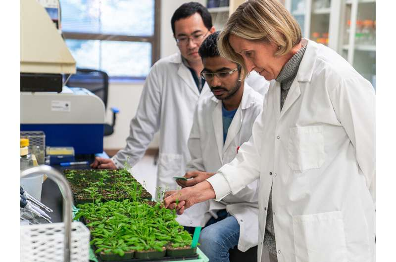 Plants pass on 'memory' of stress to some progeny, making them more resilient
