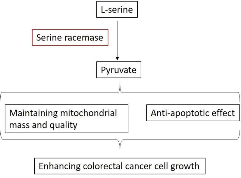 Possible key to beating colorectal cancer
