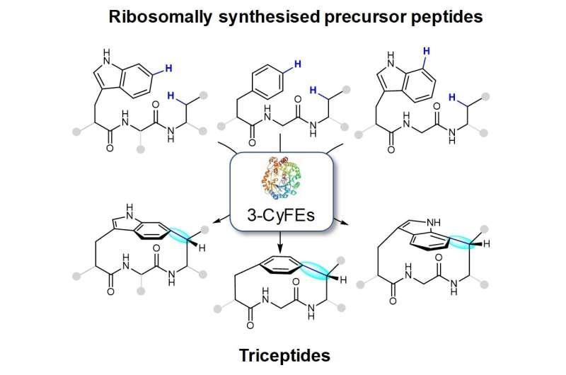 Post-translational formation of strained cyclophanes in bacteria