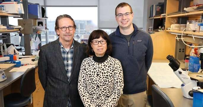 Post-transplant diabetes may be reversible:study