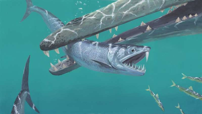 Prehistoric anchovy-like fish had large fangs and a saber tooth
