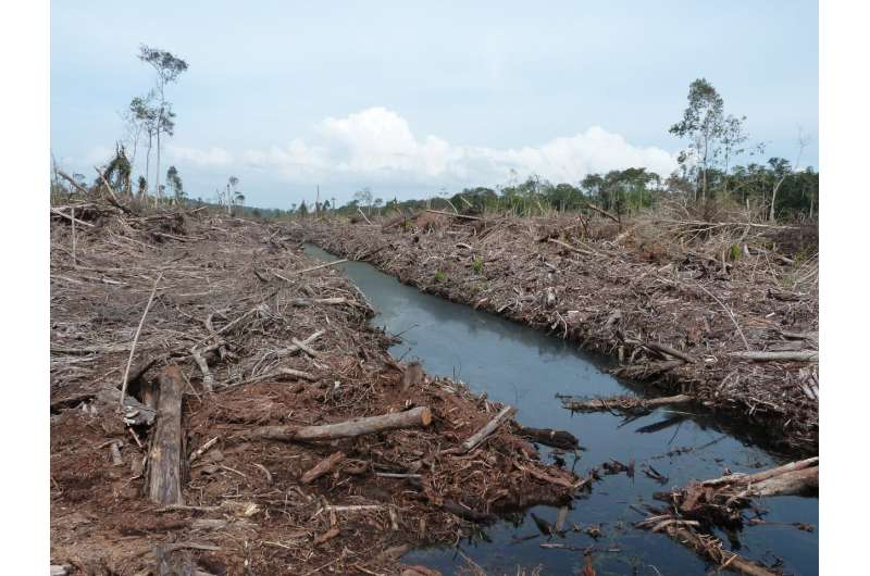Preparing land for palm oil causes most climate damage