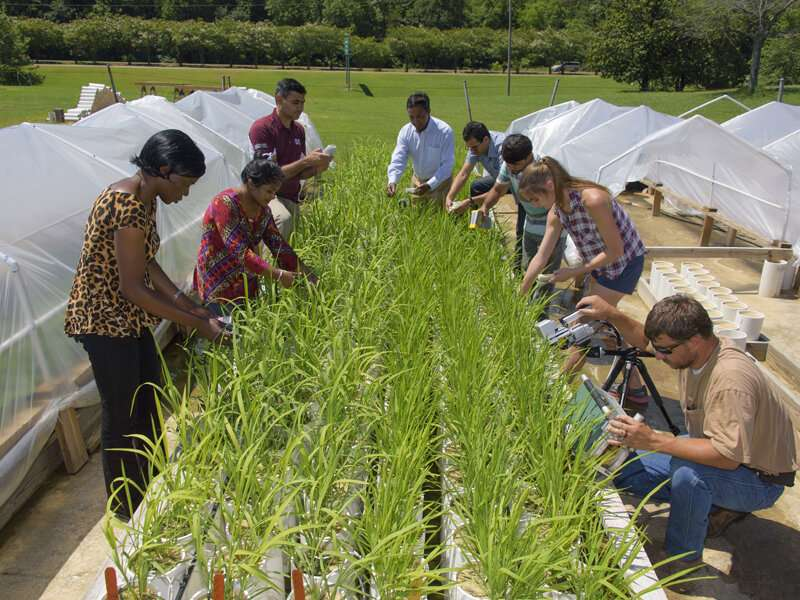Preparing plants for our future climate