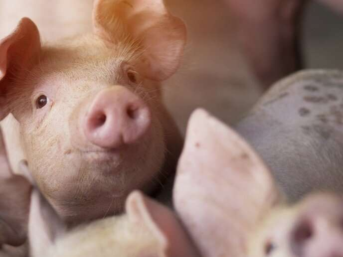 Preventing infectious swine disease spread with field-based portable device