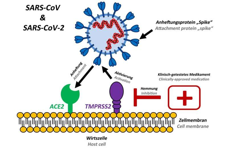 Preventing spread of SARS coronavirus-2 in humans