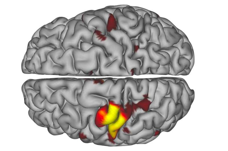 Previously undetected brain pulses may help circuits survive disuse, injury