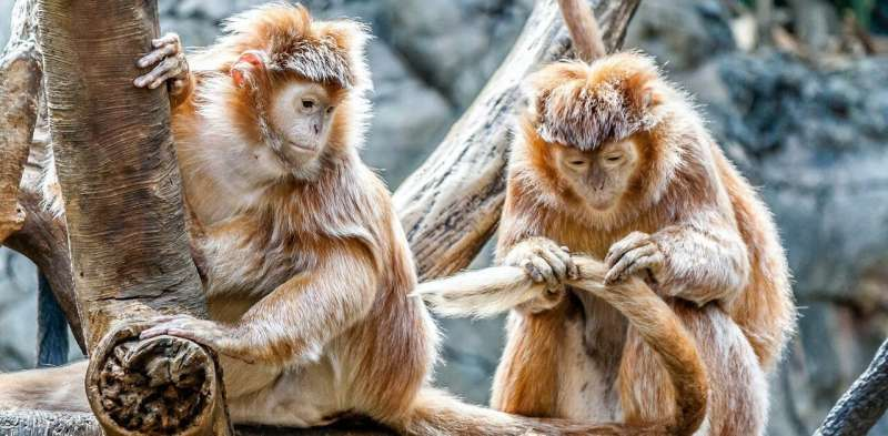 Primates are facing an impending extinction crisis—but we know very little about what will actually protect them