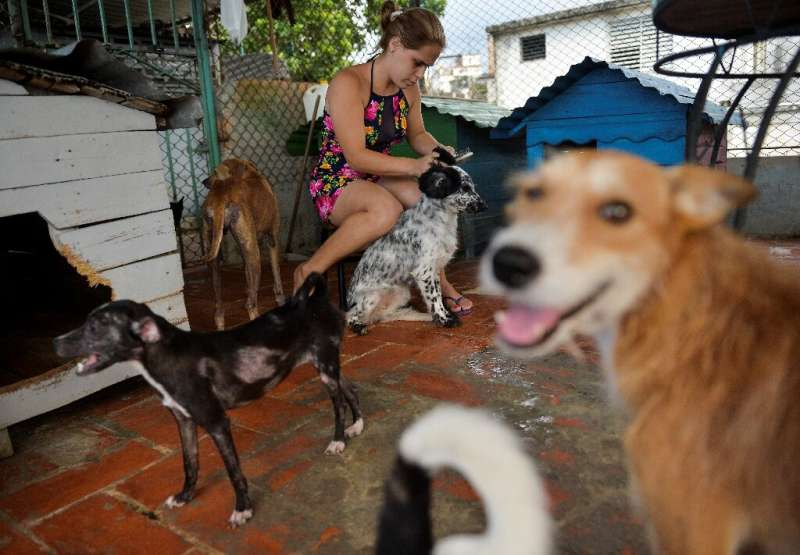 Private shelters are often the only hope for abandoned dogs in Havana