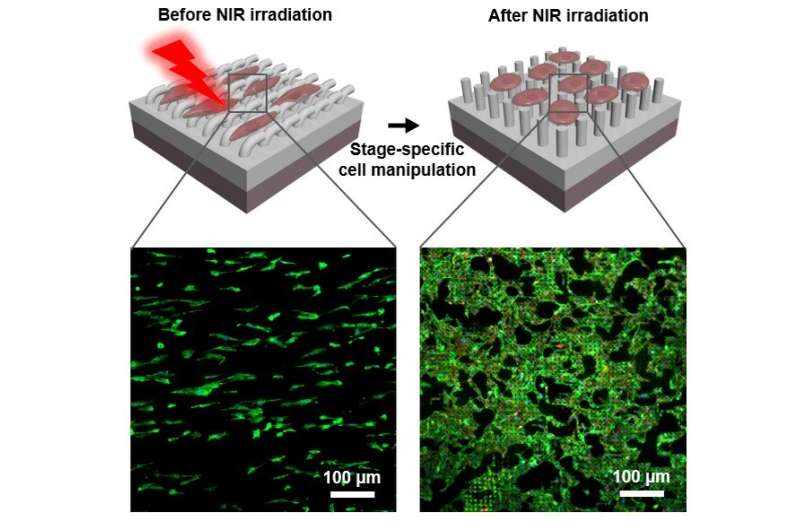 Programmed vascular endothelium remodeling using a remote-controlled 'smart' platform