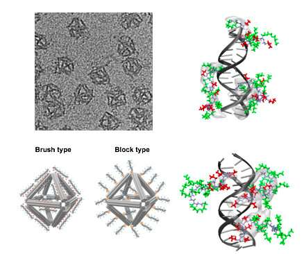 Protecting DNA origami for anti-cancer drug delivery