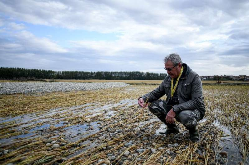 """My whole farm was under two metres of water,"" said rice grower Felice Iato, 60"