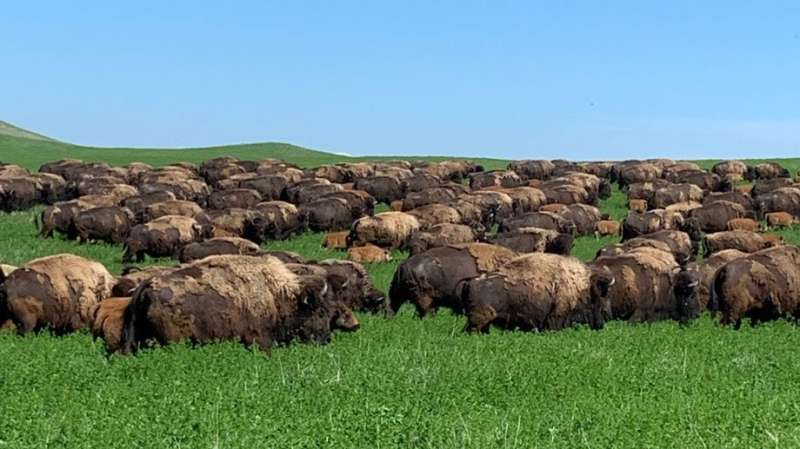 Ranchers see water, labor as rotational grazing challenges