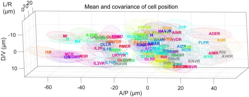 Rapid, automatic identification of individual, live brain cells