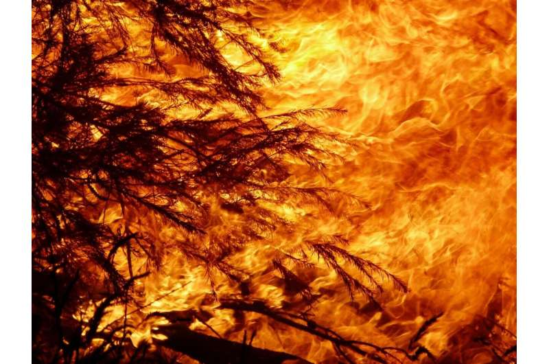 Recent Australian wildfires made worse by logging