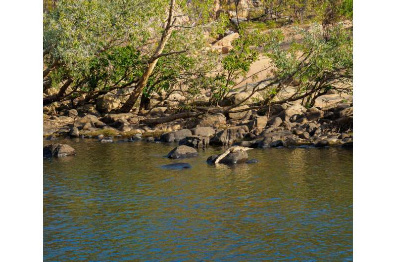 Redefining life expectancy and maximum lifespan for wildlife management