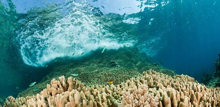 Red Sea's coral reefs help protect the KSA coast